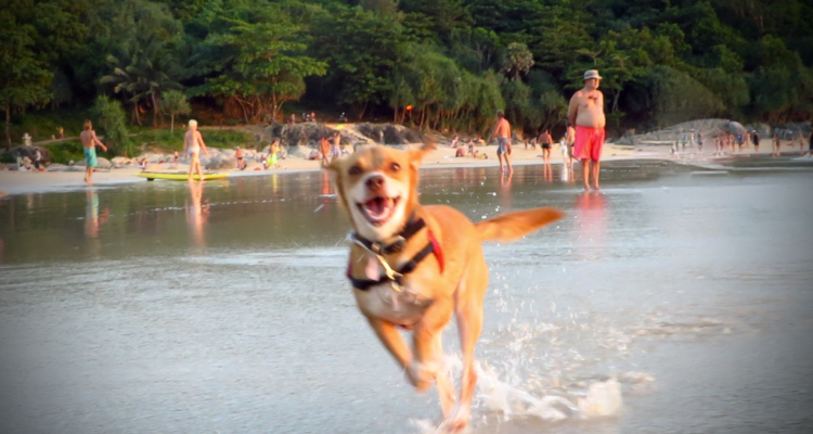 Espiritu wanderlust viajar con perro mascota Tailandia Nai Harn Beach Phuket